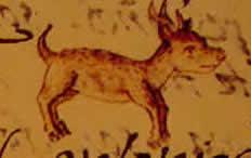 origen del chihuahua