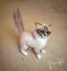 Foto de gato Ragdoll cachorro