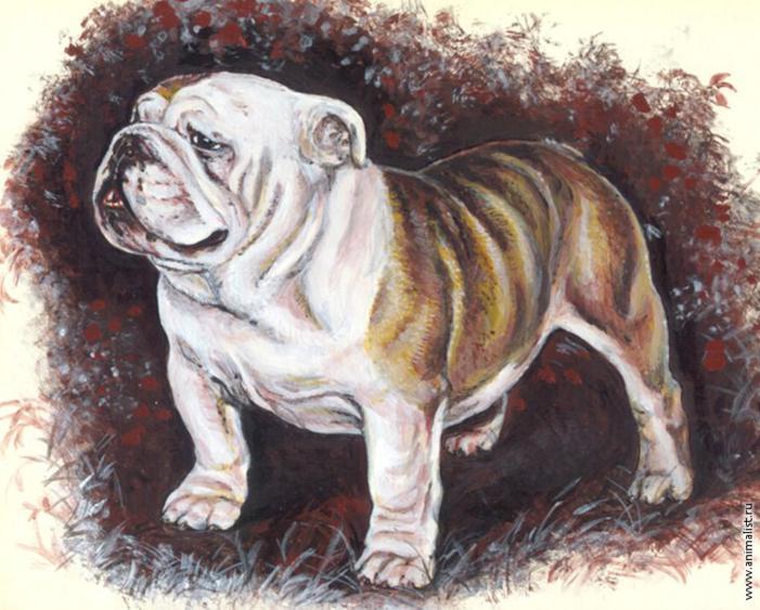 dibujo de bulldog ingles